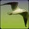 Vogelstimmen